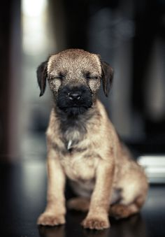 llbwwb:Todays Cuteness,for the Dog Lovers:) by Александр ★ Церкасевич
