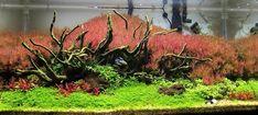 Aquascaping  www.pinterest.es/acuario3web/  twitter.com/acuario3web  (@acuario3web)