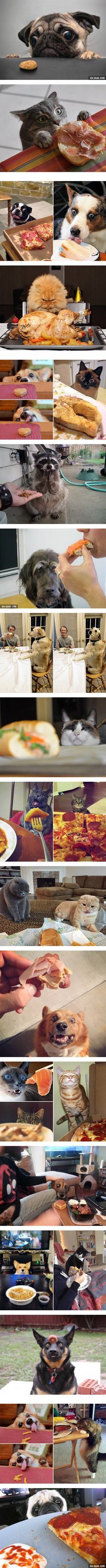 Look at these pets' facial expression looking at food will make your day