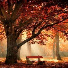 Naturbilder: schöne #Naturbilder #Natur #Baum #Herbst
