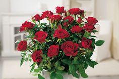 Met de volgende budget DIY-tip zet je gratis je tuin vol rozen #DIY #budget #tips
