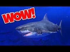 SIMULADOR DE TIBURON INCREIBLE! - VER VÍDEO -> http://quehubocolombia.com/simulador-de-tiburon-increible    Hoy jugamos a Feed And Grow, un videojuego para pc muy divertido en el que nos podemos convertir en diferentes peces y depredadores para conquistar el mar o el rio! ^^ No olvides suscribirte si aun no lo has hecho!  Twitter: Instagram: Facebook:  Créditos de vídeo a Popular on YouTube...