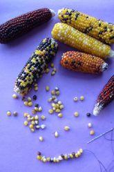 Preschool Fall Activities: Corn Kernel Necklaces