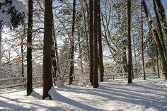 Winterurlaub in Oberbayern bei München - Forstenrieder Park