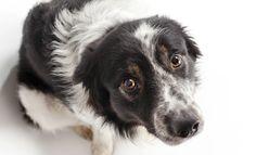 M 6 cosas que no debes hacerle a un perro