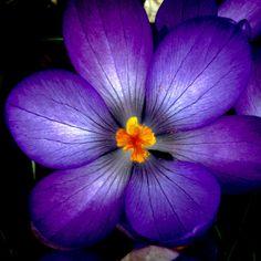 Pretty flower #glow