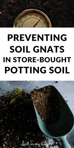 Container Gardening Fungus gnats in store-bought (often organic) potting soil has been a recognized problem for years now. Here's how I pasteurize purchased potting soil to destroy the gnats before they can wipe out my seedlings - again. Indoor Gardening Supplies, Organic Gardening Tips, Container Gardening, Sustainable Gardening, Organic Compost, Kitchen Gardening, Herb Gardening, Gardening Vegetables, Organic Farming