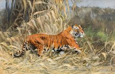 "Wilhelm Kuhnert ""Im Dschungel"" (tiger) Catalogue, Natural History, Ecology, 19th Century, Illustration, Nature, Artist, Animals, Style"