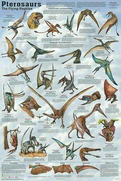 Flying Dinosaurs