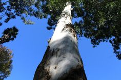Looking up by Merle Ann · 365 Project