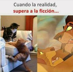 Funny pictures about Scar And Mufasa In Real Life. Oh, and cool pics about Scar And Mufasa In Real Life. Also, Scar And Mufasa In Real Life photos. Funny Animal Jokes, Really Funny Memes, Cute Funny Animals, Funny Animal Pictures, Stupid Funny Memes, Funny Relatable Memes, Funny Cats, Funniest Animals, Animal Humor