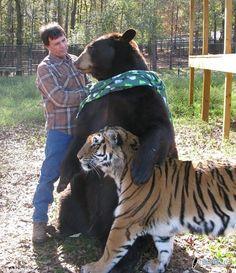 Amistad entre animales :) http://www.dimelaneta.com/amistad-entre-especies/