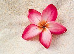 Lomilomi Massage: An Article by Gloria Coppola from Massage Today explains Lomilomi, the Hawaiian Healing Massage. #massagebiz #massagetherapists www.OneMorePress.com