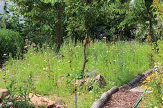 Wildblumenwiese/Magerwiese anlegen
