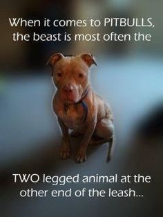 the beast on the other end of the leash. I agree. Pitbulls ARE NOT naturally mean or aggressive. It's who their own is an what they've done to the dog.