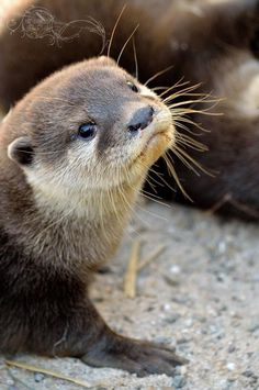 I otter pose for this picture