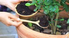 Hnojení růží, květin a zeleniny: Co z kuchyně jim svědčí?