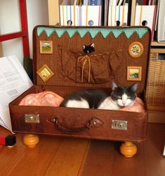10 Cat Projects You Can DIY With Materials You've Already Got