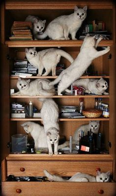 Crazy Cat Lady Bookshelf - Click to see loads of great pictures of cats and kittens to brighten your day.