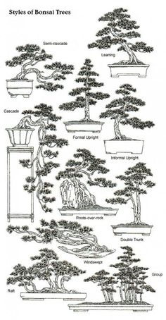 A Beginner's Guide to Bonsai - - A comprehensive guide for creating miniature trees and learning the science behind dwarfing trees. Bonsai Fruit Tree, Bonsai Tree Care, Bonsai Tree Types, Mini Bonsai, Bonsai Plants, Bonsai Garden, Garden Trees, Fruit Trees, Fig Tree