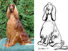Willie.  Ch Brynbar Good Will Hunting.  This photo was on my FB page and artist Michael Steddum made it into a cartoon character.  Perfect for an Irish Setter.