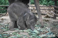 Touching photos show an elephant family that was nearly torn apart http://thedo.do/1Kz3HRc