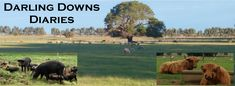 Have We Present Day Mothers Got It So Bad? @ Darling Downs Diaries