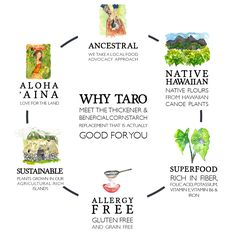 Benefits of Taro - Voyaging Foods Starchy Vegetables, Allergy Free, Natural Cures, Superfood, Allergies, Health And Wellness, Benefit, The Cure, Healthy Recipes