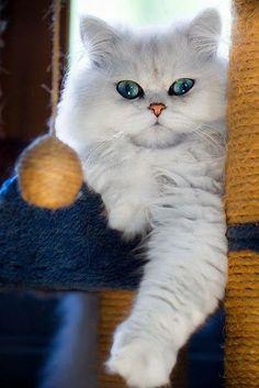 Those eyes r so hypnotizing!!!!