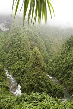 the green trek (Luzon island - Philippines)