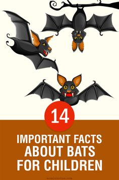 Bats are not one of the most lovable creatures in the world. But, they have much to offer. And, here are some bat facts for kids for you to know just why.