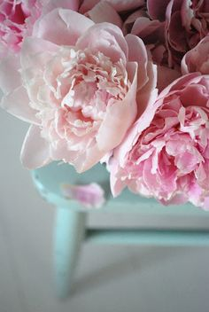 Pink peonies. So thankful I have several bushes in my yard...