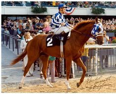 Secretariat- 1973 Triple Crown Champion- The horse that never gave up <3