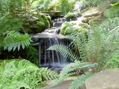 Love the woodland plants and the waterfall to the koi pond.