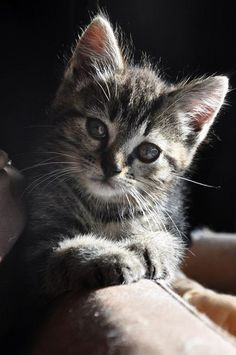 I found a kitten that looked like this- and he kept me company for 14 years ~