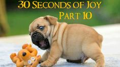 30 Seconds of Joy! Part 10! Lazy Tug of War!