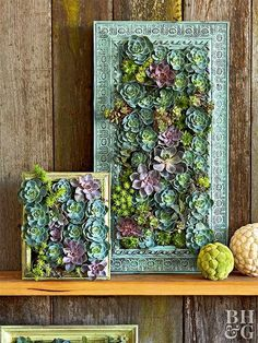 Indoor Container Gardening make a living succulent picture metal frame - Create your own living mosaic to hang on a wall, indoors or out! This stunning succulent wall display takes your plant game to a whole new level. Succulent Frame, Vertical Succulent Gardens, Succulent Wall Art, Succulent Terrarium, Plant Wall, Succulent Ideas, Colorful Succulents, Hanging Succulents, Succulents Garden