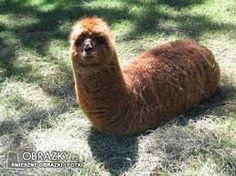 Znalezione obrazy dla zapytania dziwne zwierzęta