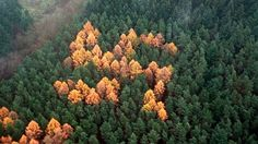 Horticultural Hate: The Mystery of the Forest Swastikas