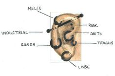 diagram of ear piercings