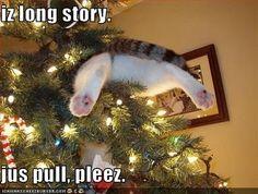 cat stuck in tree lol
