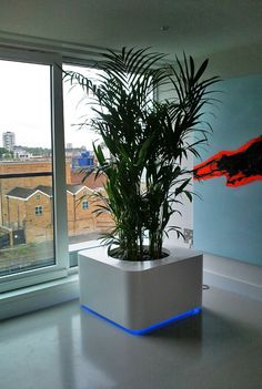 Powder coated white planter with castors and LED light and Kentia palm in the modern London penthouse in Islington
