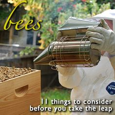 11 Things to Consider Before Keeping Bees