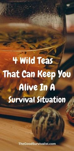 Here are a few wild teas that anyone looking to survive the wilderness should know how to identify and brew: http://www.thegoodsurvivalist.com/4-wild-teas-that-can-keep-you-alive-in-a-survival-situation/  http://www.thegoodsurvivalist.com/4-wild-teas-that-can-keep-you-alive-in-a-survival-situation/  https://www.facebook.com/PreppingMeansPrepared/