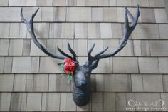 flowers on the stag