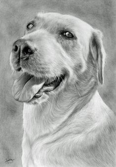 Poochy by CubistPanther on DeviantArt Pencil Drawings Of Animals, Teaching Drawing, Graphite Drawings, Drawing Projects, Pencil Portrait, Dog Paintings, Pincel, Dog Portraits, Art Sketches