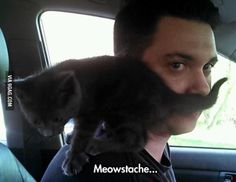 Funny pictures about Cute Mustache. Oh, and cool pics about Cute Mustache. Also, Cute Mustache photos. Funny Puns, You Funny, Funny Fails, Hilarious, Funny Stuff, Crazy Cat Lady, Crazy Cats, Funny Images, Funny Pictures
