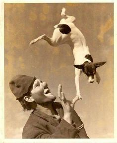 Jack joined the Circus . Vintage photo of a Clown & Jack Russell Terrier . Circus Vintage, Vintage Dog, Rat Terrier Dogs, Toy Fox Terriers, Jack Russell Dogs, Jack Russell Terrier, Dog Photos, Dog Pictures, Portraits Victoriens