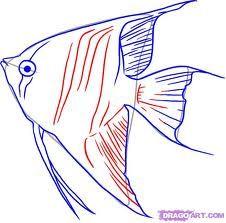 drawing fish - Google Search
