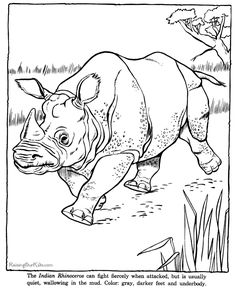 Indian rhinoceros drawing and coloring page desene animate, regnul animal,